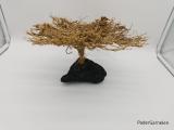 Garnelenbaum