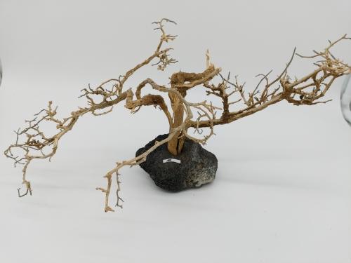 Garnelenbaum L 18x30