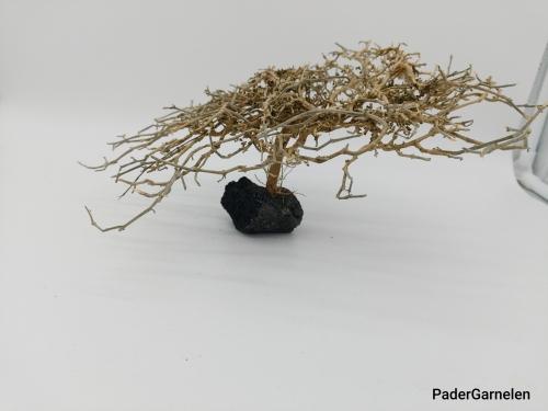 Garnelenbaum L 14x25